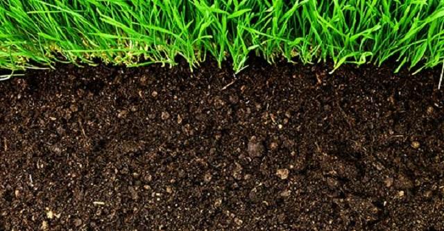Ảnh hưởng của việc sử dụng phân bón và hóa chất bảo vệ thực vật trong sản xuất nông nghiệp và môi trường - Ảnh 1