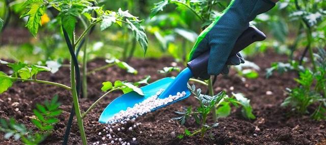 Ảnh hưởng của việc sử dụng phân bón và hóa chất bảo vệ thực vật trong sản xuất nông nghiệp và môi trường - Ảnh 3