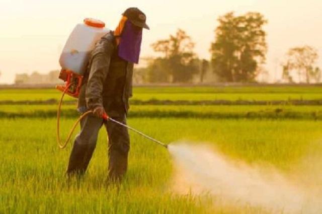Ảnh hưởng của việc sử dụng phân bón và hóa chất bảo vệ thực vật trong sản xuất nông nghiệp và môi trường - Ảnh 7