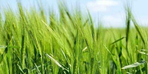 Tại sao chúng ta sử dụng hoá chất nông nghiệp