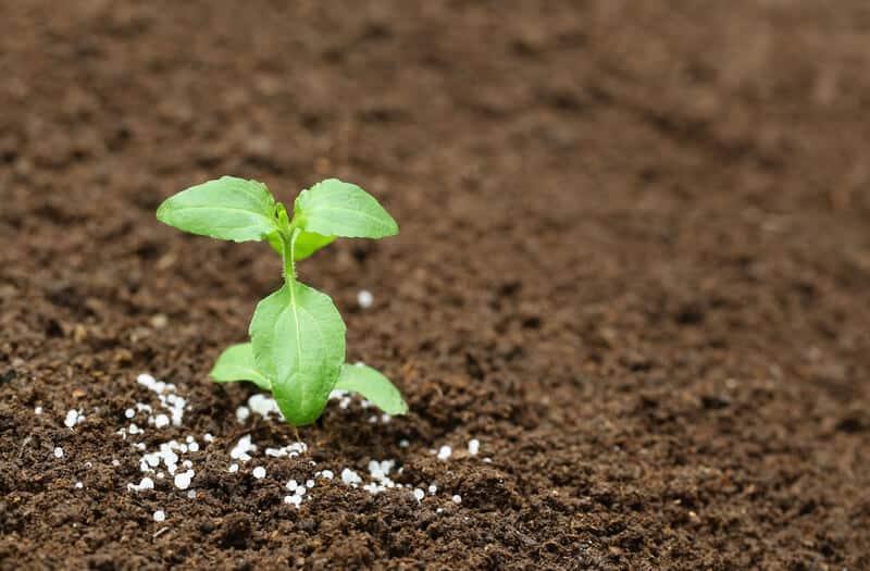 Phân bón không làm thay đổi thực vật