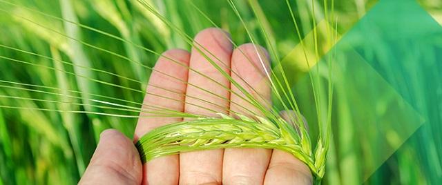 Hóa chất nông nghiệp: Phân loại và ảnh hưởng (Hình 2)