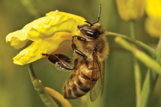 Pháp đi đầu trong chiến dịch chống sử dụng hóa chất nông nghiệp - Ảnh minh họa