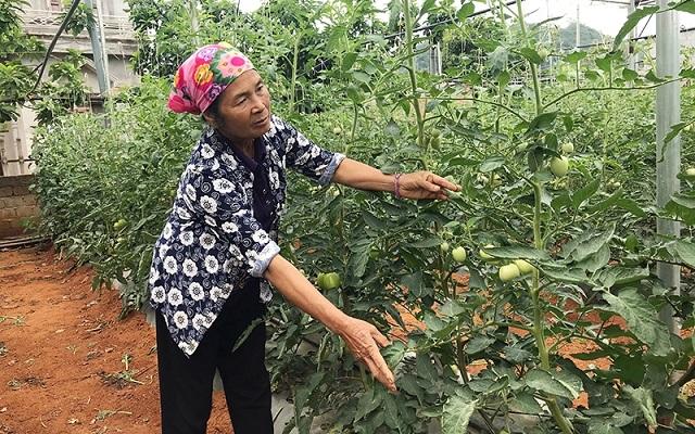 Phát triển nông nghiệp hữu cơ, bảo đảm an toàn cho người sử dụng và môi trường - Ảnh minh họa