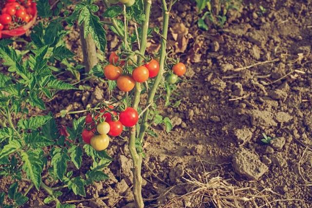 Hóa chất nông nghiệp: Ứng dụng trong cuộc sống (Hình 2): Tại sao các nhà sản xuất thực phẩm cần sử dụng hóa chất nông nghiệp?