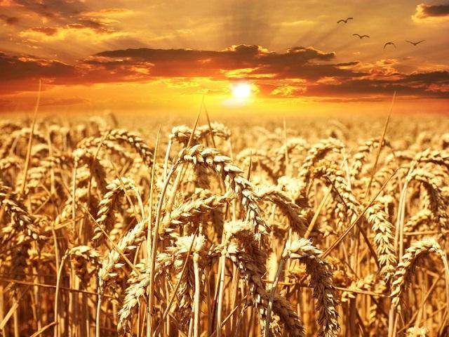 Top 10 tập đoàn nông nghiệp lớn nhất thế giới - Ảnh 2