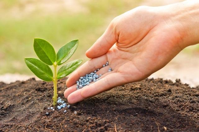 Top 10 tập đoàn nông nghiệp lớn nhất thế giới - Ảnh 5