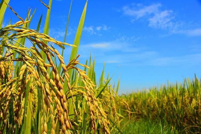 Top 5 địa chỉ cung cấp hóa chất nông nghiệp uy tín tại Việt Nam - Ảnh 1