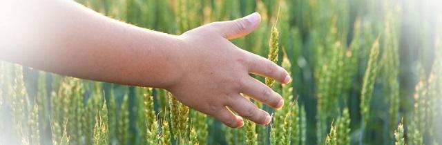 Top 5 địa chỉ cung cấp hóa chất nông nghiệp uy tín tại Việt Nam - Ảnh 3