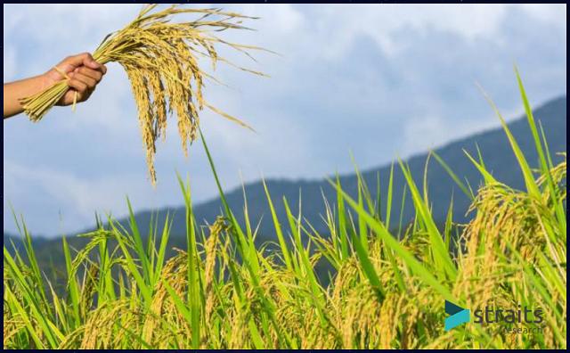 Top 5 địa chỉ cung cấp hóa chất nông nghiệp uy tín tại Việt Nam - Ảnh 5
