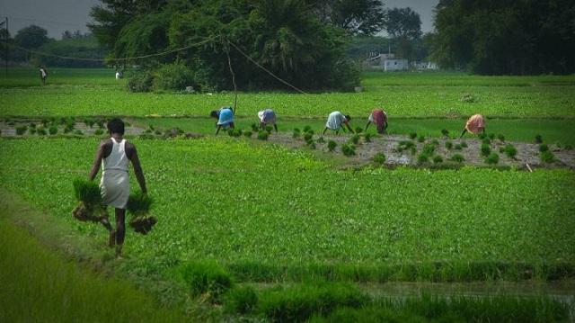 Top 5 địa chỉ cung cấp hóa chất nông nghiệp uy tín tại Việt Nam - Ảnh 6